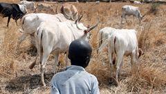 Znepřátelené kmeny v Súdánu bojovaly o dobytek. Zemřelo 139 lidí